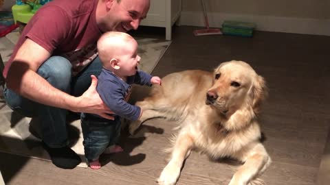 Baby boy finds Golden Retriever pretty hilarious