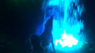 Dog attacks blue water fountain