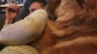 The Lovely Dog Cuddles With  Guy - Video