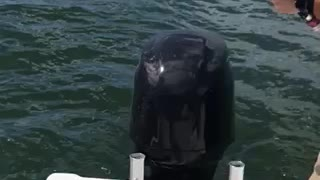 Cooperski Catches a Shark