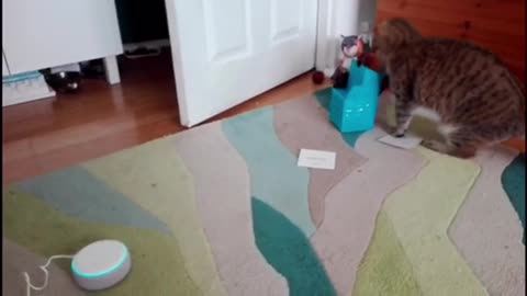 Hilarious! Smart speaker gives unexpected response when I ask it to speak to my cats.
