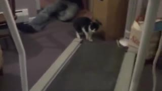 These Cats See Treadmill For The First Time, and Their Reactions Are Hilarious! - Video