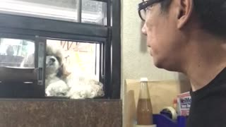 Doggo Doesn't Like When His Owner Sneezes