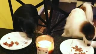 Music black dog and white dog eating on table