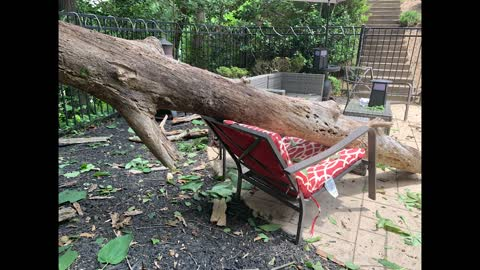 Quick-Footed Mother Escapes Falling Tree