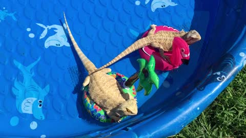 Bearded Dragons throw themselves a pool party!
