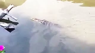 Mysterious swimming creature leaves tourists guessing - Video