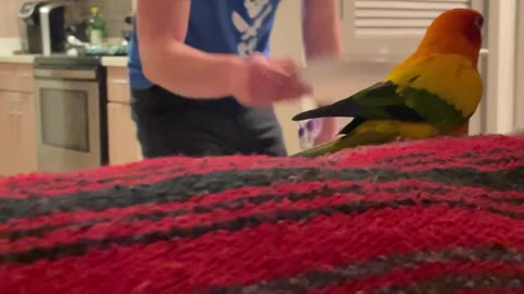Parrot plays games with dad