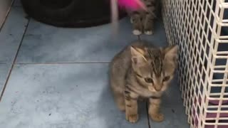 2 Small Cats Playing Together Funny