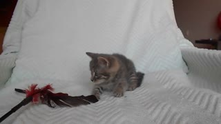 Antonio The Kitten - Video