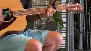 Parrot Sings Along With Man Playing Guitar