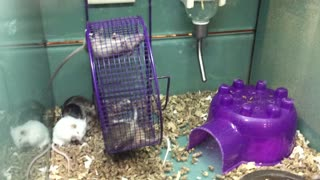 Mouse hangs on for dear life! - Video
