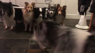 Disciplined Dogs Line Up And Only Come When Called By Name