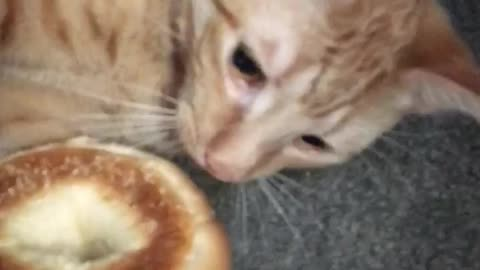 Cat Burglar Steals Woman's Bagel And Takes Off