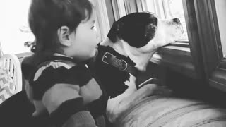 Toddler shows just how gentle pit bulls can be - Video