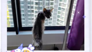 Rescue Skinny Cat - The Story of Kathy