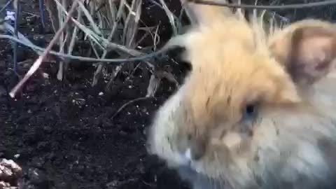 Bad Bunny Digging for Easter Eggs