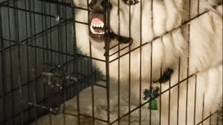 Muddy Dog Stuck In Crate Delivers Hysterical 'Broken' Face