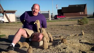 Prairie Dogs Playing Cutest Compilation