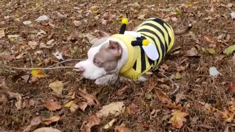 Dog backyard brown leaves bumble bee costume