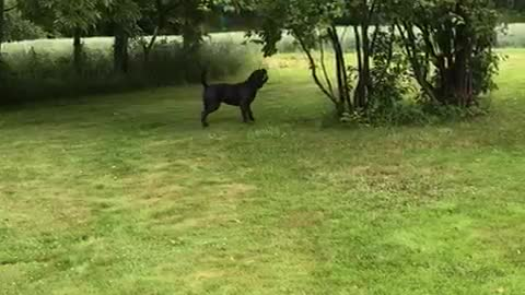 Mia the Dog Chomps at Bouncing Balloon