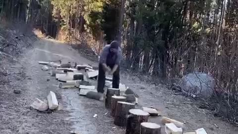 Long Line of Logs Turned into Firewood