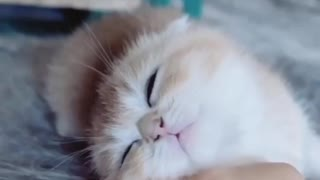 How to get a kitten to sleep - Video