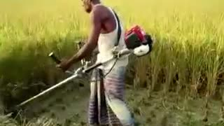 man coping rice fields with machine v fastly  - Video