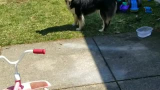 A dog and bubbles