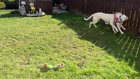 Dog sisters getting over excited