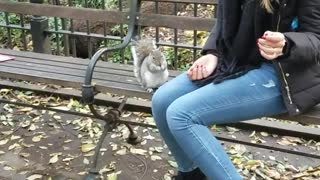Woman on park bench feeding squirrel