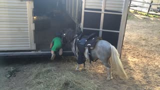 Miniature Pony and his Miniature Trainer