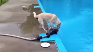 My dog falls in Swimming pool! - Video
