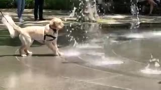 Happy dog plays in shooting water fountain - Video