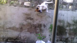 Dog Squeezes His Way Through A Wall
