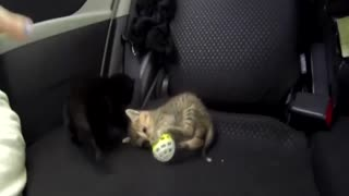 Baby Cats Playing - Video