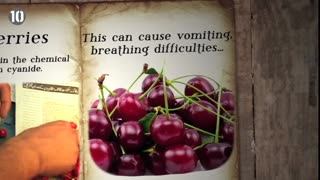 10 Poisonous Foods We Like To Eat - Video