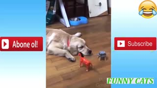 Very funny cats and kids video