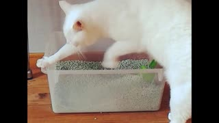 Cat scratches the litter box and the air  - Video