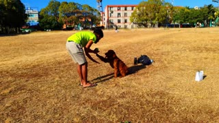 Dogs Training system #5