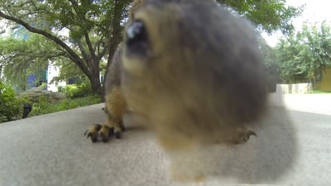 GoPro: Up close squirrel encounter