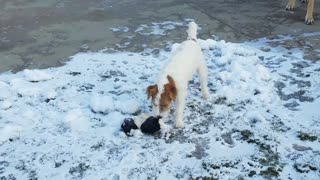Determined puppy trying to get his frozen teddy bear