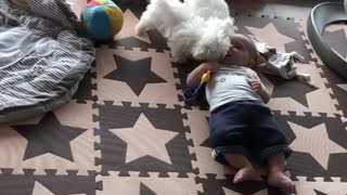 Two Maltese Puppies Play With Baby