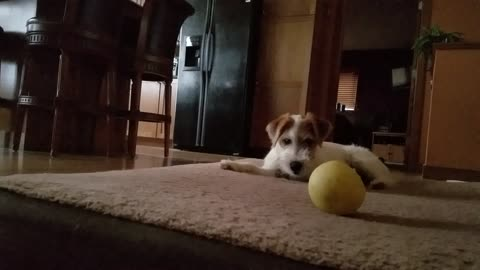 Silly puppy refuses to get off of moving bed