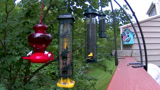 Bird Feeder from New Hampshire