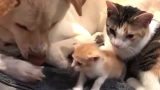A dog has nice friends who play with each other