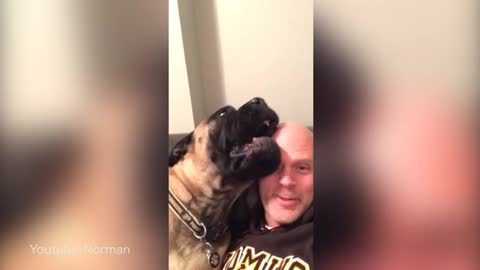 This Dog REALLY Hates His Human's Singing And Would Like This Fresh Hell To Stop