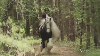 Horse's beautiful coat and flowing mane make him a true stunner - Video