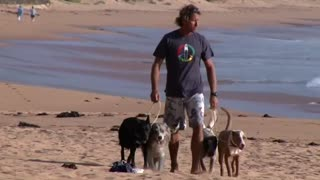 Australian dog trainer surfs with four legged friends - Video