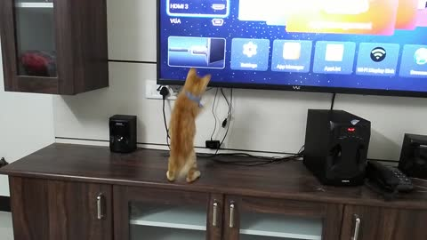 Cat Unexpected Fail While Fighting With TV